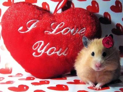 imagenes-para-el-dia-de-san-valentin-con-frases-peque-o-400x299