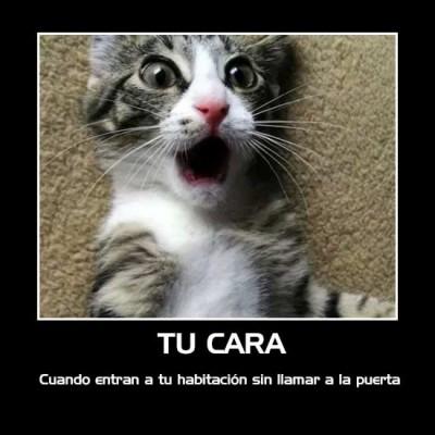 gatitos en situaciones graciosas (16)
