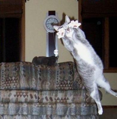 imágenes de gatos divertidos (13)