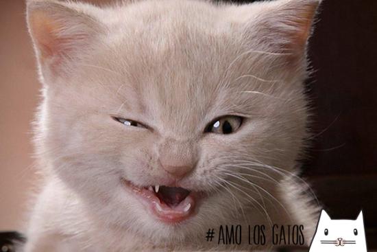 Im genes de gatos bonitos en graciosas situaciones - Fundas para unas de gato ...