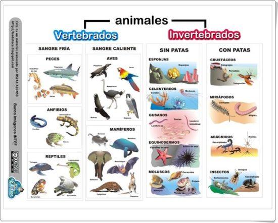 información Día del Animal (2)