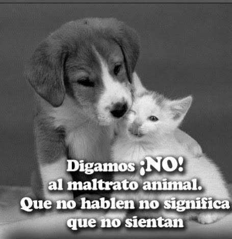 Animales con Frases  (13)