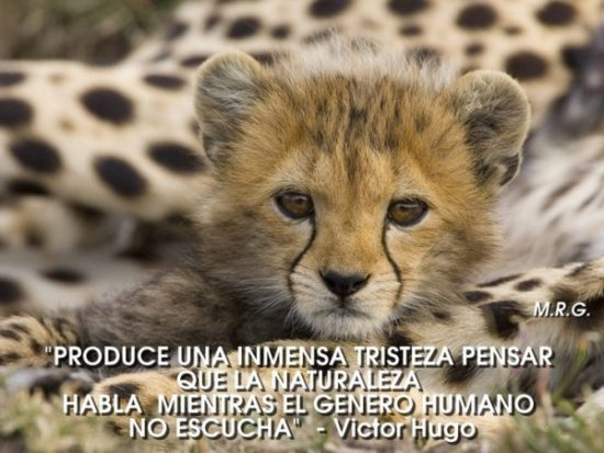 Animales con Frases  (14)