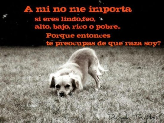 Animales con Frases  (17)
