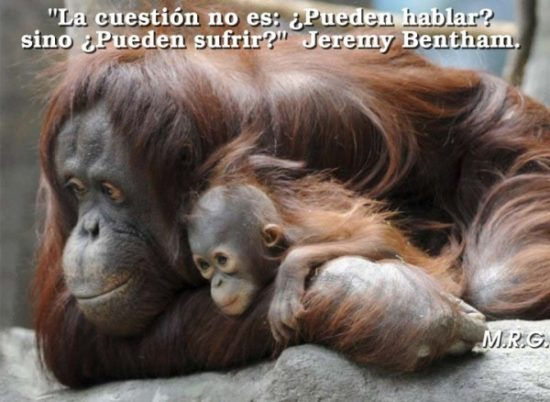 Animales con Frases  (19)