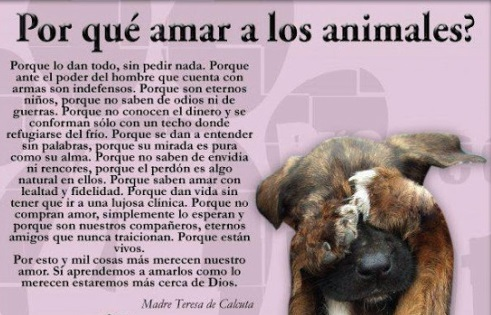 Animales con Frases  (2)