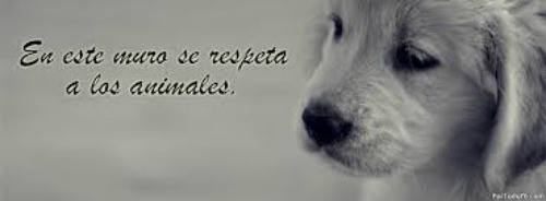 Animales con Frases  (7)