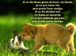 Animales con Frases  (9)