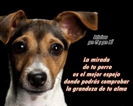 Animales con frases para Reflexionar  (2)
