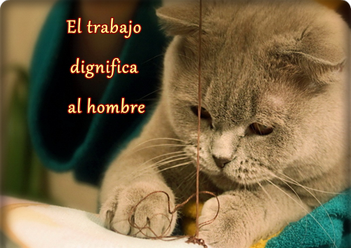 Animales con frases para Reflexionar  (5)