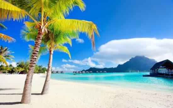 Playa sol y palmeras  (3)
