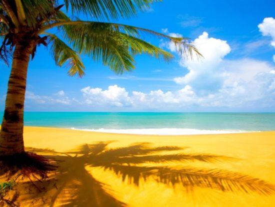 Playa sol y palmeras  (9)