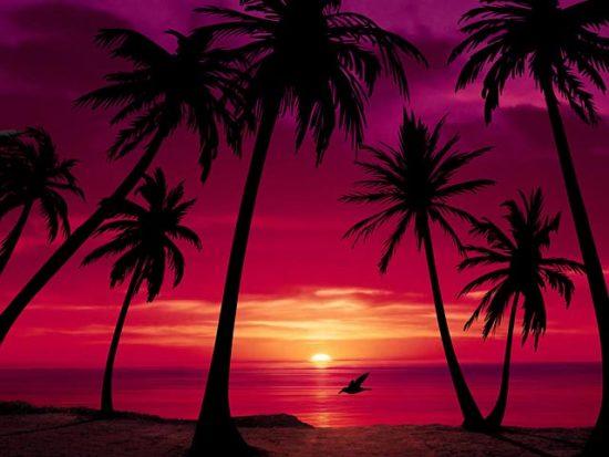 Playas paradisiacas  (15)