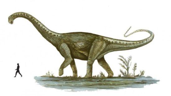 especies de Dinosaurios (17)
