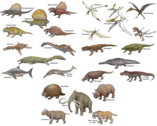 especies de Dinosaurios (29)