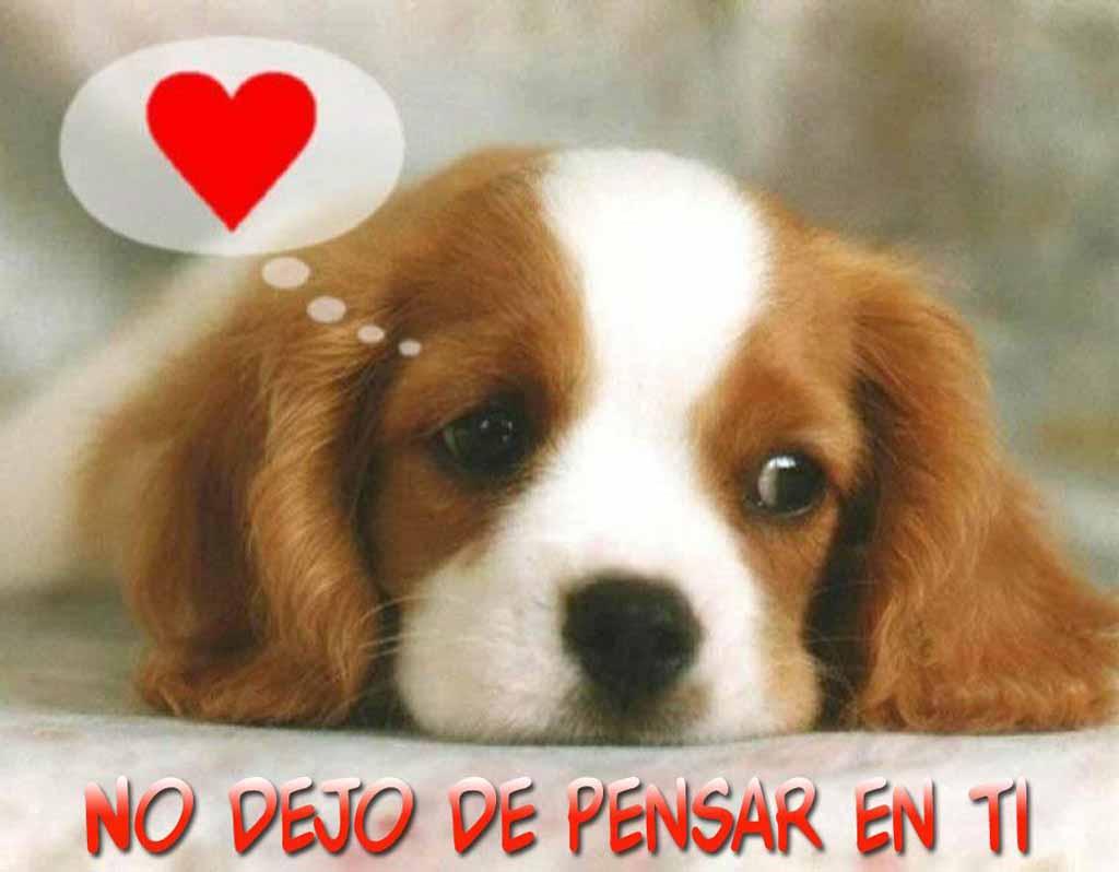 Imagenes-de-perros-con-frases-bonitas (1)