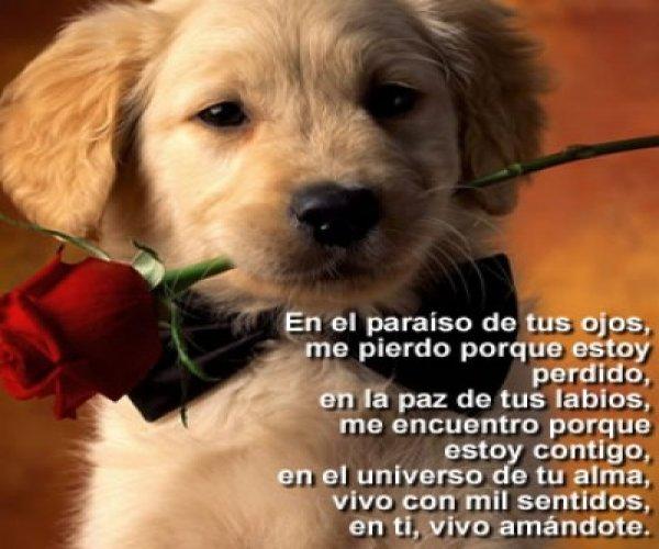 imágenes-de-perros-con-frases-de-amor