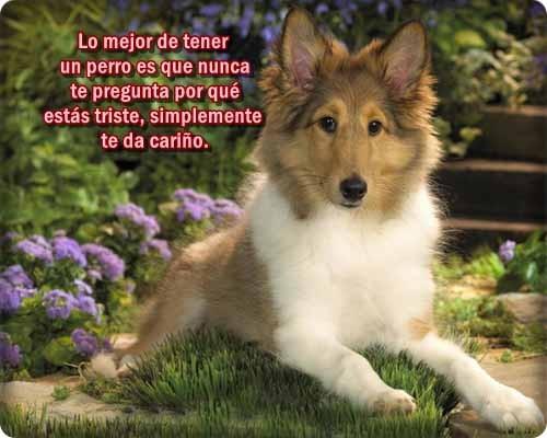 imagenes-de-perros-con-frases-bonitas-5 (1)