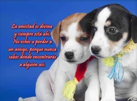 imagenes-de-perros-con-frases-bonitas