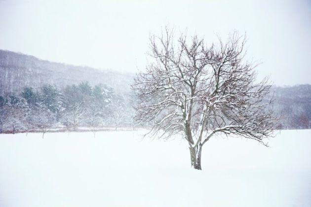 qtsl-invierno-winter-2011