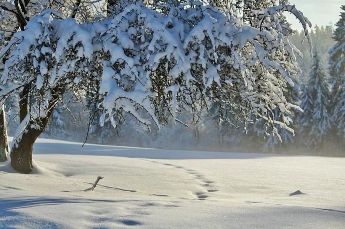 solsticio-de-invierno-830x553