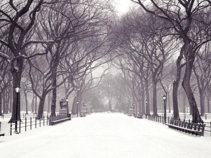 ws_Winter_in_the_park_1024x768