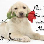 Imágenes de Felíz Jueves con bonitas frases y mensajes