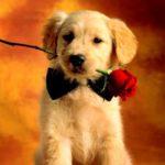 Imágenes de Amor con movimiento de Corazones, Rosas y Animales