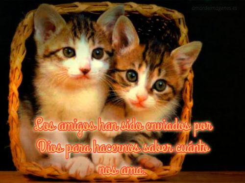 frases-de-amistad-con-imagenes-de-gatos-envio