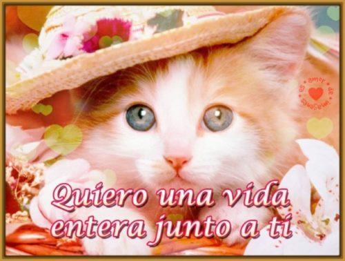 gatitos-con-mensajes-de-amor1