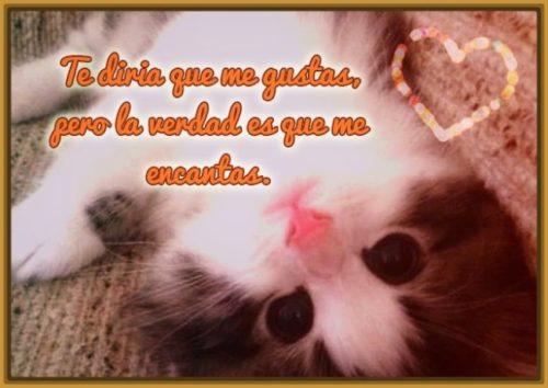 gatitos-tiernos-con-mensajes-de-amor-1