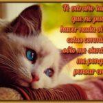 45 Imágenes de gatitos tiernos con frases y mensajes bonitos