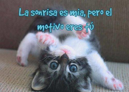 imagenes-de-gatitos-tiernos-con-frases-de-amor41