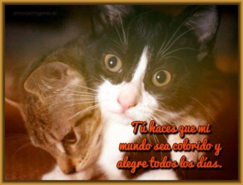 imagenes-de-gatitos-tiernos-con-mensajes-de-amor