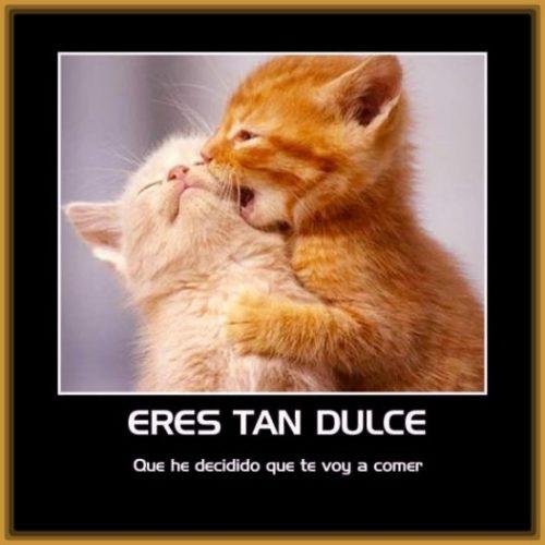imagenes-de-gatos-con-mensajes-de-amor
