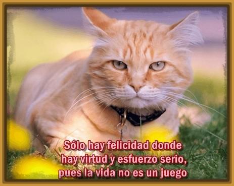 imagenes-de-gatos-con-mensajes