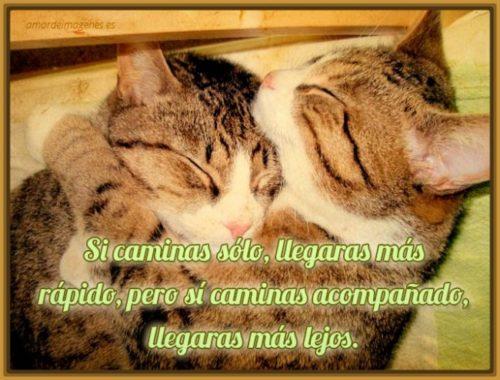 imagenes-de-gatos-tiernos-con-mensajes-1