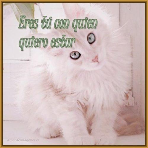 imagenes-de-gatos-tiernos-con-mensajes-para-facebook