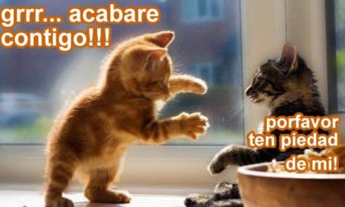 imagenes-para-portada-de-facebook-de-gatitos-tiernos-con-frases