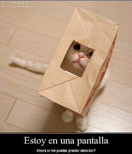 prestame-atencion-gatito