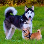 Imágenes de perros y todas sus razas