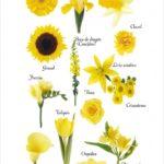 Imágenes de flores con nombres, tipos, colores e información