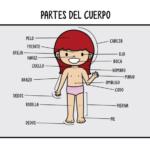 Imágenes del cuerpo humano: partes, organos, huesos, músculos y sistémas