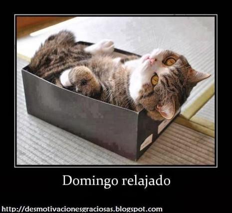 gatito relajado con frase