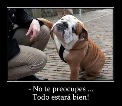 perro con frase no te preocupes