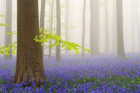 El Bosque Azul de Halle, en Bélgica