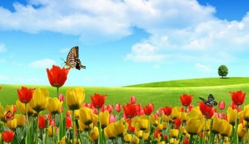 jardin-con-mariposas1.jpg5_
