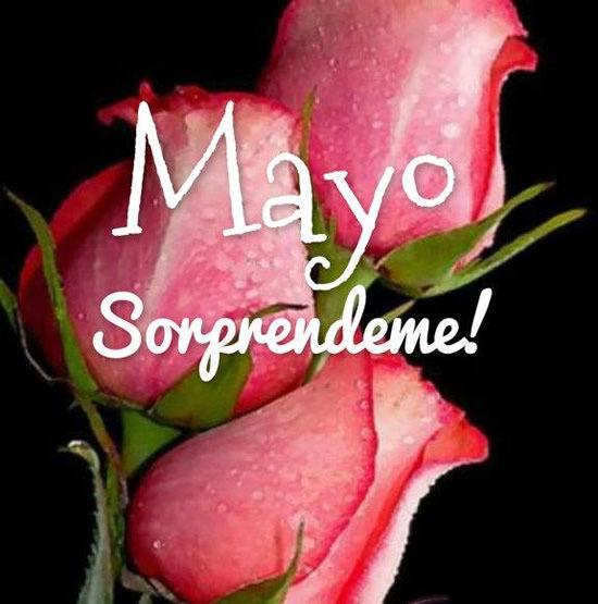 Bienvenido Mayo (3)