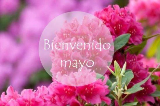 Bienvenido Mayo (8)