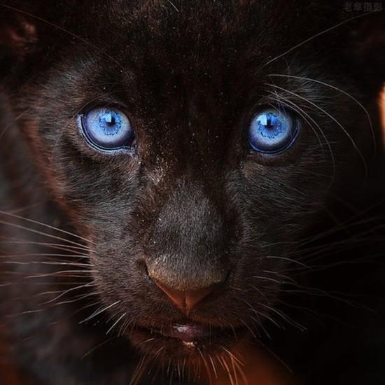 Imágenes de Animales Hermosos (5)